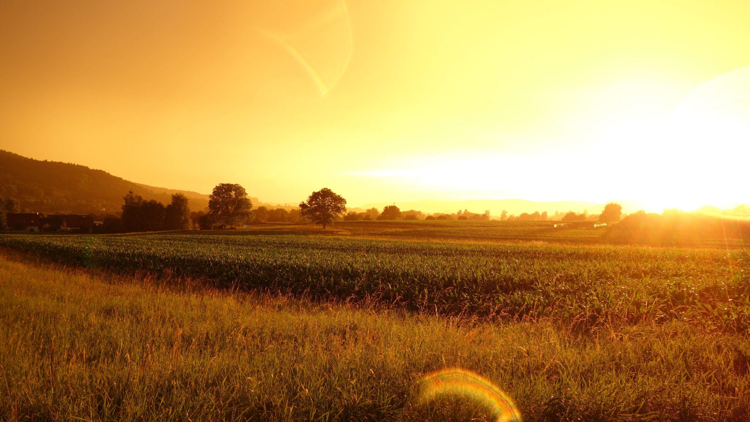 Des débouchés dans l'agriculture
